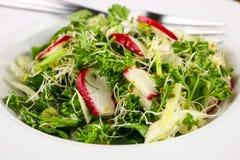 Salade de fenouil Images libres de droits