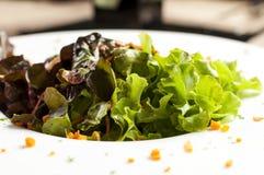 Salade de la plaque blanche Photo libre de droits