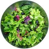 Salade de laitue Photos stock