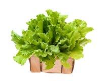 Salade de laitue d'isolement sur le fond blanc Feuilles de salade photographie stock libre de droits
