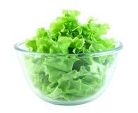 Salade de laitue dans la cuvette transparente Images libres de droits