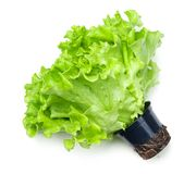 Salade de laitue dans le pot d'isolement sur le fond blanc photos stock