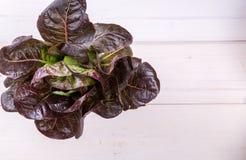 Salade de laitue sur le blanc Photographie stock