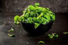 Salade de Mache, crue photos stock