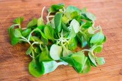 Salade de Mache sur le fond blanc images libres de droits
