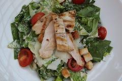 Salade de poulet avec des tomates Photo libre de droits