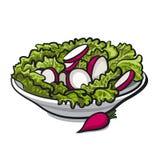 Salade de radis Images stock