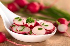 Salade de radis Images libres de droits