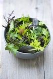 Salade de source image stock