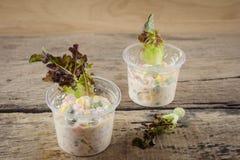 Salade de thon dans la tasse sur la table en bois Photo libre de droits