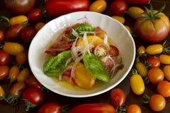 Salade de tomate avec des tomates Photographie stock libre de droits