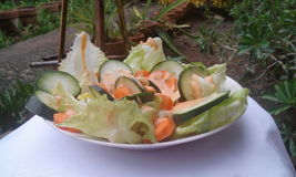 Salade de Veggie photo stock