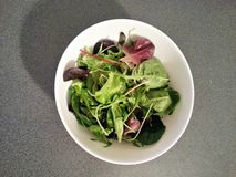 Salade de verts hydraulique de légumes mélangés, nourriture propre, nourriture de régime, nourriture saine Photographie stock