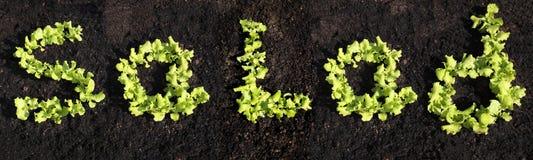 Salade de Word avec de la laitue image libre de droits