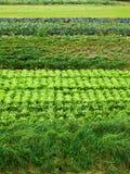Salade en kool Stock Foto's