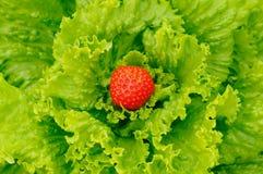 Salade et fraise Photographie stock