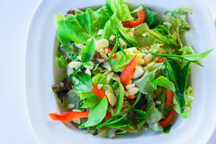 Salade fraîche avec le thé vert Images stock