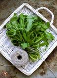 Salade fraîche d'arugula Photo libre de droits