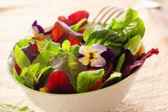 Salade fraîche d'herbe photographie stock