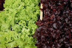 Salade fraîche dans les lits en bois Jardinage compétent photographie stock libre de droits