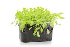 Salade fraîche dans un récipient d'isolement image libre de droits