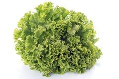 Salade fraîche de Batavia Photographie stock libre de droits