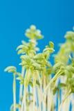 Salade fraîche de cresson images stock