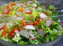 Salade fraîche de jardin Photos libres de droits