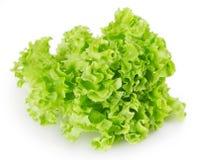 Salade fraîche de laitue images libres de droits