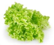 Salade fraîche de laitue photos libres de droits