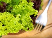 Salade fraîche de laitue image stock