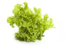 Salade fraîche sur un fond blanc Photos libres de droits