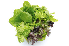 Salade hydroponique Photos libres de droits