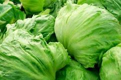 Salade 'Iceberg' Image libre de droits