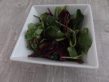 Salade mélangée de feuille de bébé dans une cuvette images libres de droits