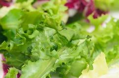 Salade mélangée de laitue images libres de droits