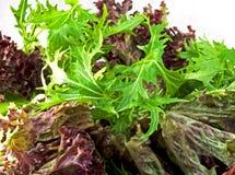 Salade-Mélangez photographie stock