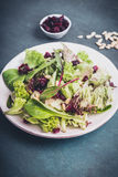 Salade mixte avec des canneberges Photo libre de droits
