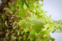 Salade-Nahaufnahmeschuß Stockbild