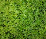 Salade naturelle verte Images stock