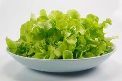 Salade op witte achtergrond Stock Foto