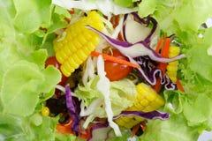 Salade op witte achtergrond Stock Fotografie