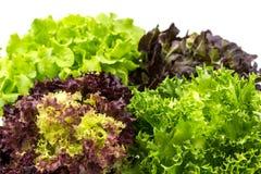 Salade op witte achtergrond Royalty-vrije Stock Afbeelding