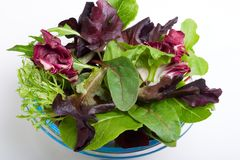 Salade organique Image stock