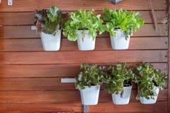 Salade organique par le légume de vert de mélange de la ferme organique propre image stock