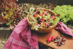 Salade rougeâtre et verte de ferme de croissance fraîche de maison dans le plat en bois image stock