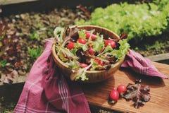 Salade rougeâtre et verte de ferme de croissance fraîche de maison dans le plat en bois photographie stock