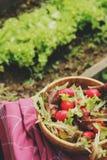 Salade rougeâtre et verte de ferme de croissance fraîche de maison dans le plat en bois images stock
