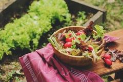 Salade rougeâtre et verte de ferme de croissance fraîche de maison dans le plat en bois, images libres de droits