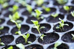 Salade végétale organique photos stock